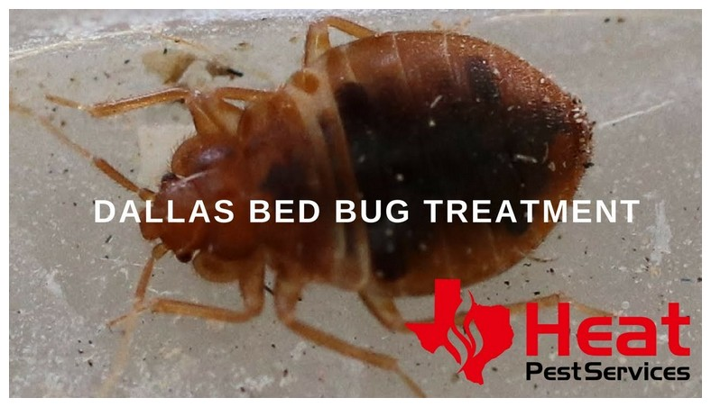 Is There Any Home Remedies To Kill Bed Bugs