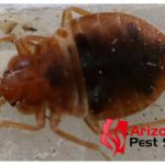 Kill Bed Bug Eggs Heat