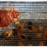 Kill Bed Bugs With Heat Outside