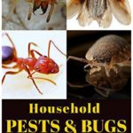 Natural Way To Get Rid Of Bed Bugs