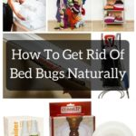 Proof Bed Bug Killer Spray Reviews