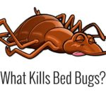Strongest Bed Bug Killer
