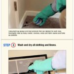 What Can Use To Get Rid Of Bed Bugs?