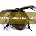 What To Use To Get Rid Of Bed Bugs Yourself?