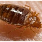 Will A Plastic Mattress Cover Prevent Bed Bugs?