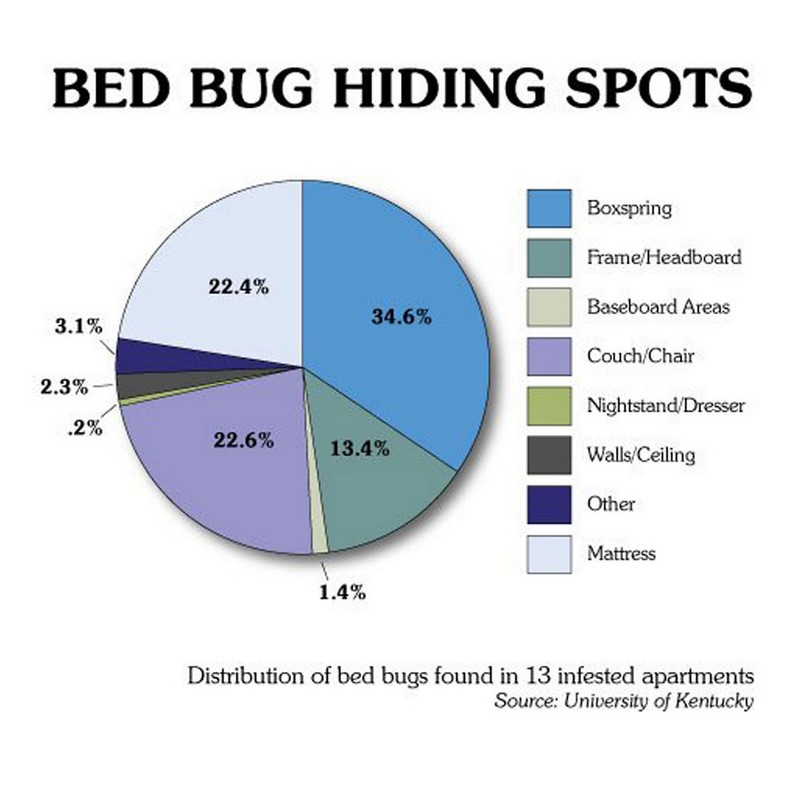 All Natural Ways To Get Rid Of Bed Bugs