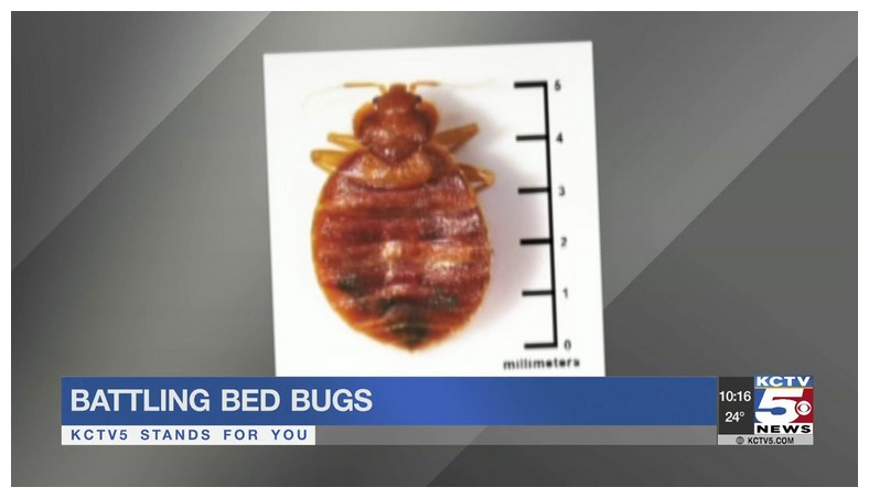 Average Cost For A Bed Bug Extermination
