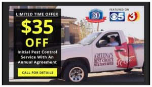 Average Cost Of Bed Bug Exterminator In Arizona