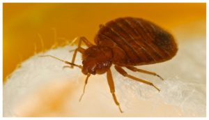 Bed Bug Exterminator Prices Nyc