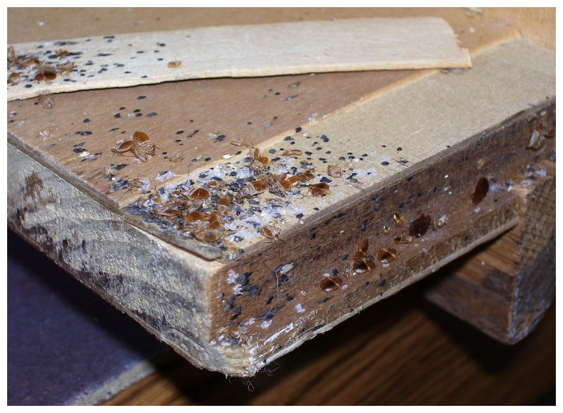 Bed Bugs In New Wood Furniture