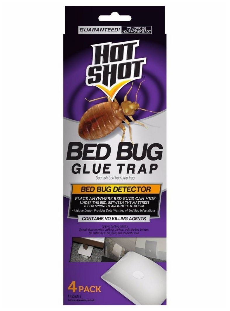Bed Bugs In Your Box Spring