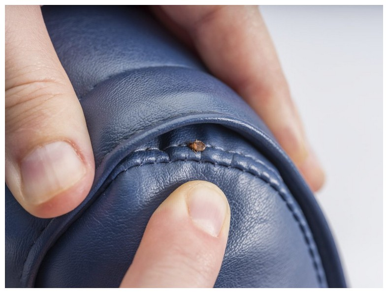 Bed Bugs Travel In Luggage