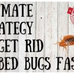 Does Bed Bug Killer Powder Work?