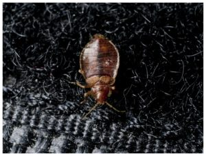 Electric Bed Bug Heaters For Sale Uk