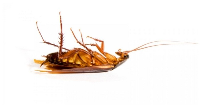 Getting Rid Of Bed Bugs In Wood Furniture