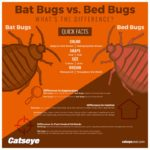 How Can I Keep Bed Bugs Off Me?