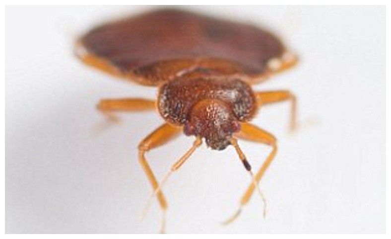 How Can You Keep Bed Bugs Off Your Body