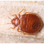 How Do U Get Rid Of Bed Bugs Bites?