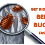 How Effective Is An Exterminator For Bed Bugs?