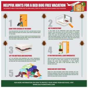 How Fast To Get Rid Of Bed Bugs