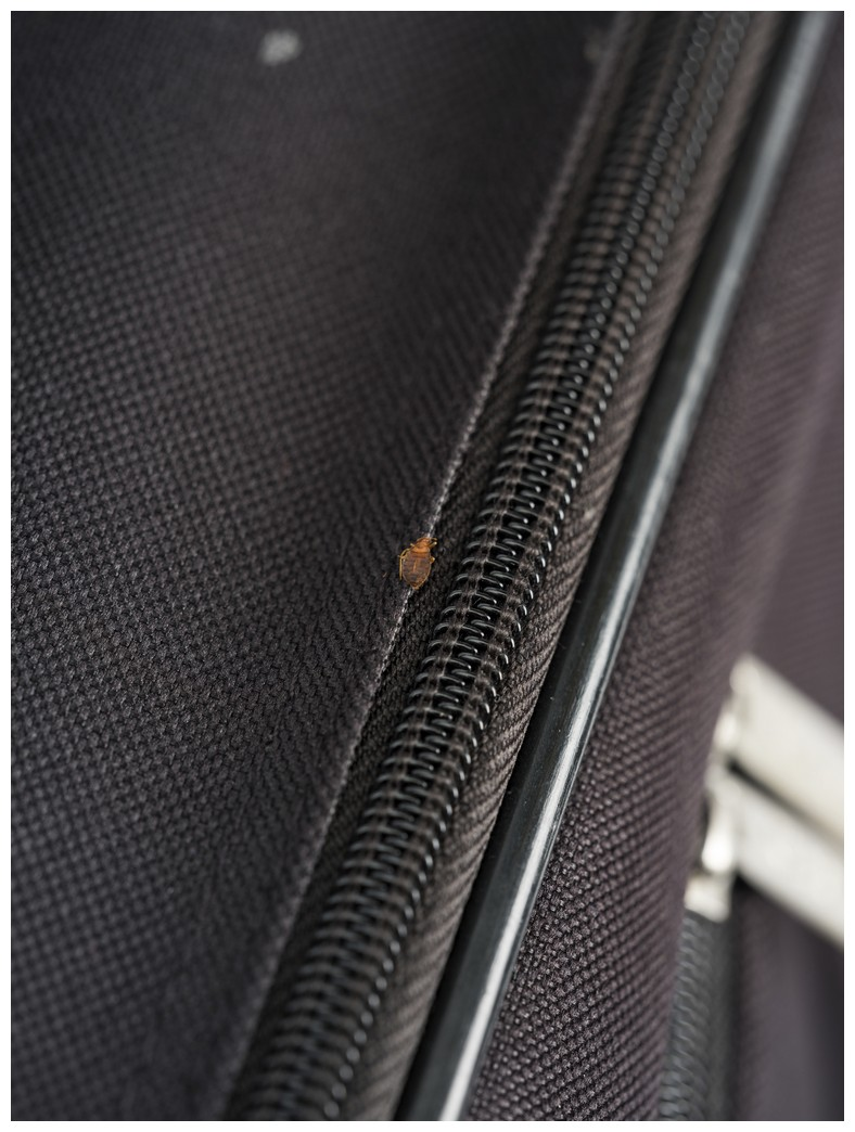 How To Get Bed Bugs Out Of Clothes And Luggage