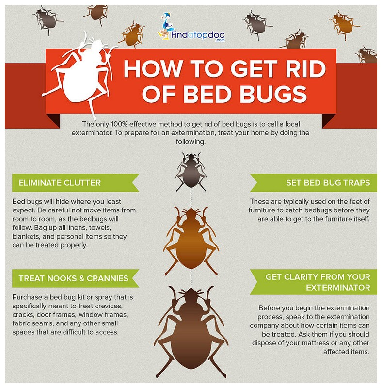 How To Get Rid Of Bed Bugs Best Way