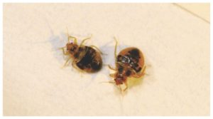 How To Get Rid Of Bed Bugs Bites Fast And Easy