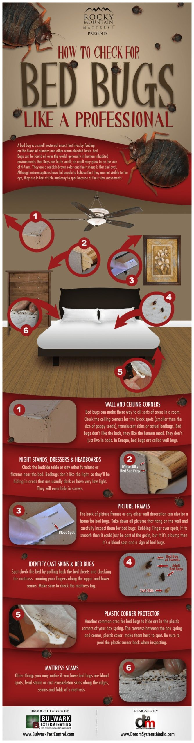How To Get Rid Of Bed Bugs In A Mattress Naturally