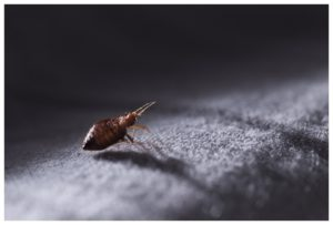 How To Get Rid Of Bed Bugs In Nursing Home