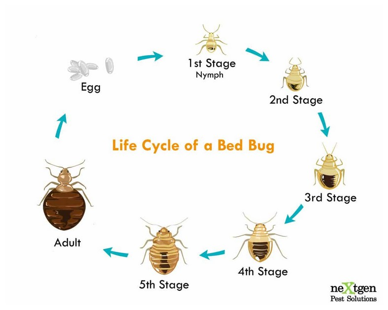How To Heat Treat Bed Bugs Yourself
