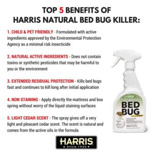 How To Kill A Bed Bug Naturally