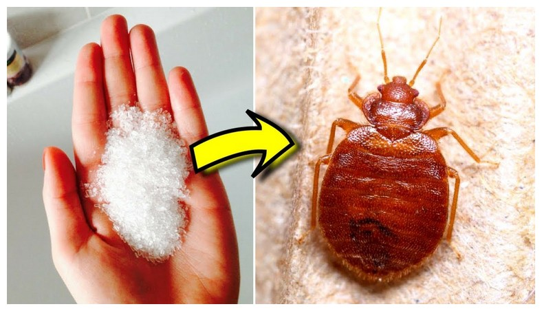 How To Kill Bed Bugs At Home Naturally