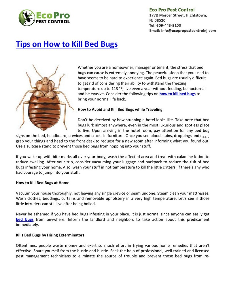 How To Kill Bed Bugs At Home Pest Control
