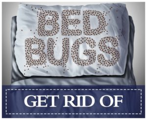 How To Kill Bed Bugs Off Your Clothes