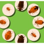 How To Kill Bed Bugs On Clothes Without Dryer?