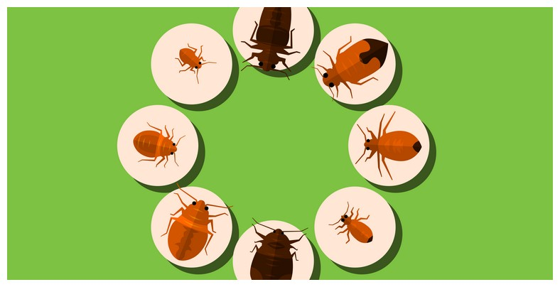 How To Kill Bed Bugs On Clothes Without Dryer
