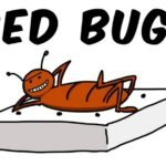 Natural Way To Get Rid Of Bed Bugs With Dryer Sheets