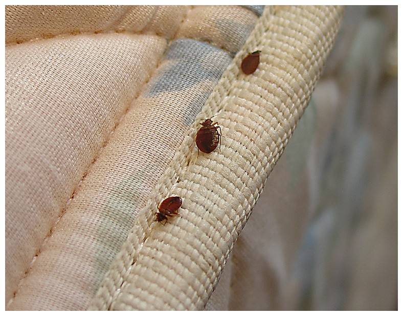 Preparing Your House For Bed Bug Treatment