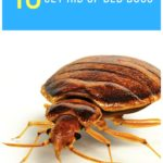 Proof Bed Bug Spray Smell