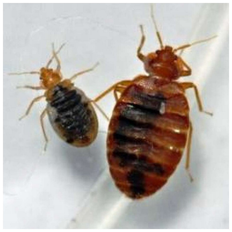 Terminix Bed Bug Inspection Cost