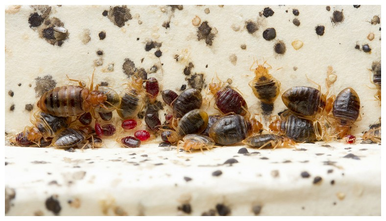 What Are Some Natural Ways To Kill Bed Bugs
