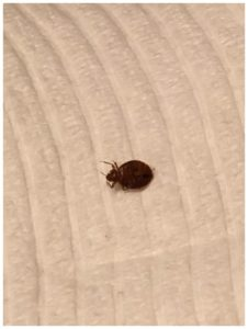 What Can I Use To Kill Bed Bugs