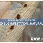 What Can You Kill Bed Bugs With?