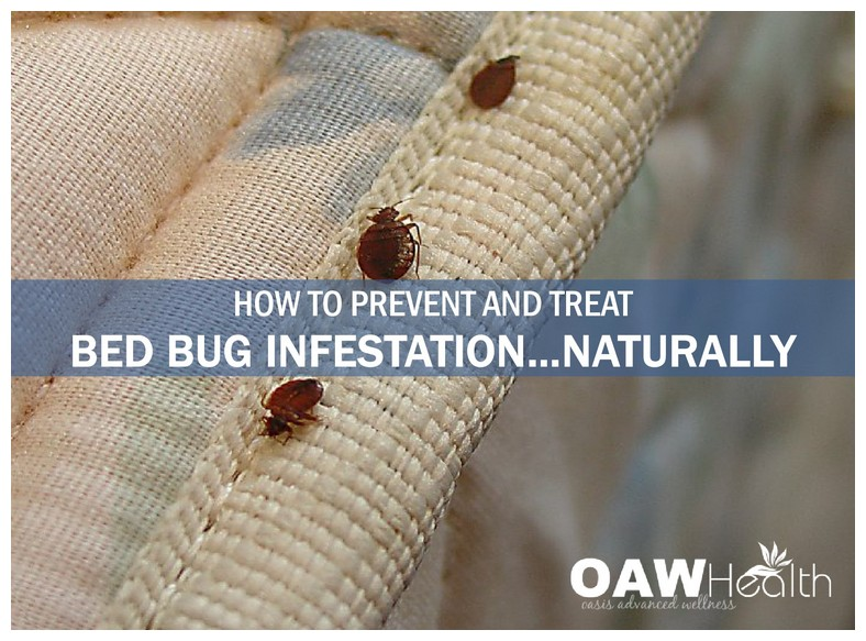 What Can You Kill Bed Bugs With