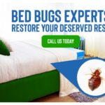 What Chemicals Do Professional Exterminators Use To Kill Bed Bugs?