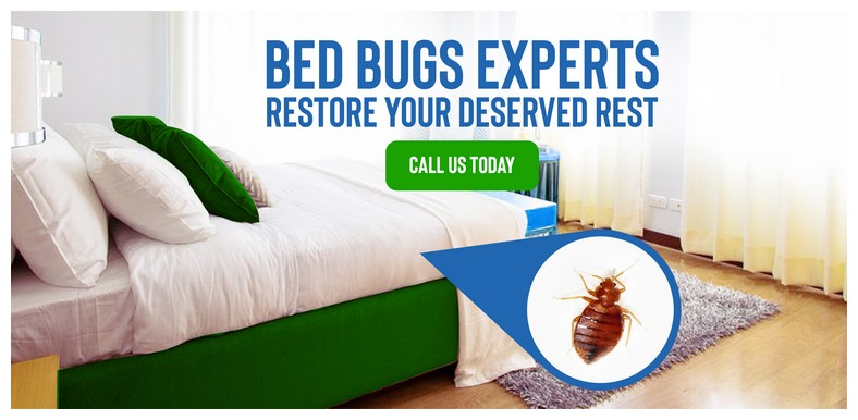 What Chemicals Do Professional Exterminators Use To Kill Bed Bugs