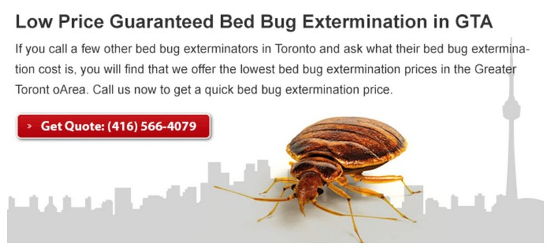 What Gets Rid Of Bed Bugs Fast