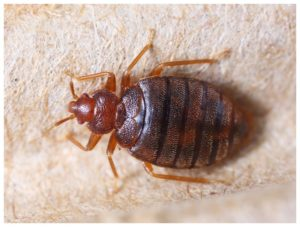 What Is The Best Steamer To Kill Bed Bugs