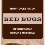 What Kills Bed Bugs Fast?