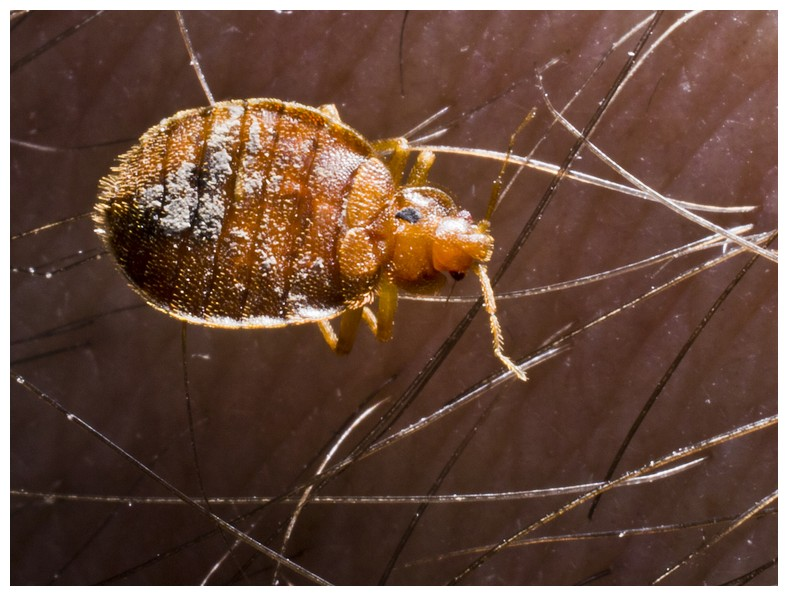 What Kills Bed Bugs On Contact
